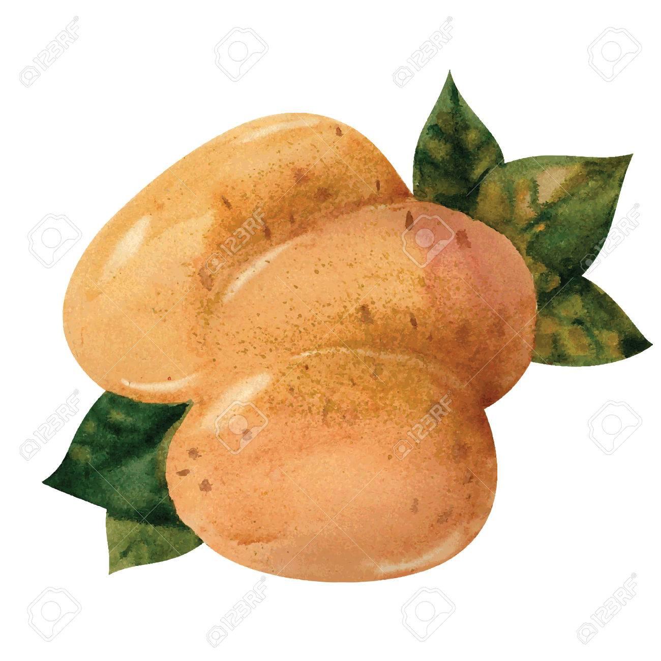 1300x1300 Drawn Potato Vector