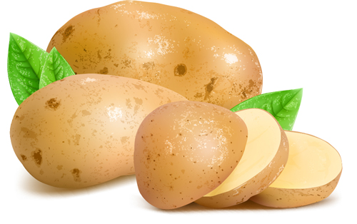 500x314 Fresh Potatoes And Sliced Vector Free Download