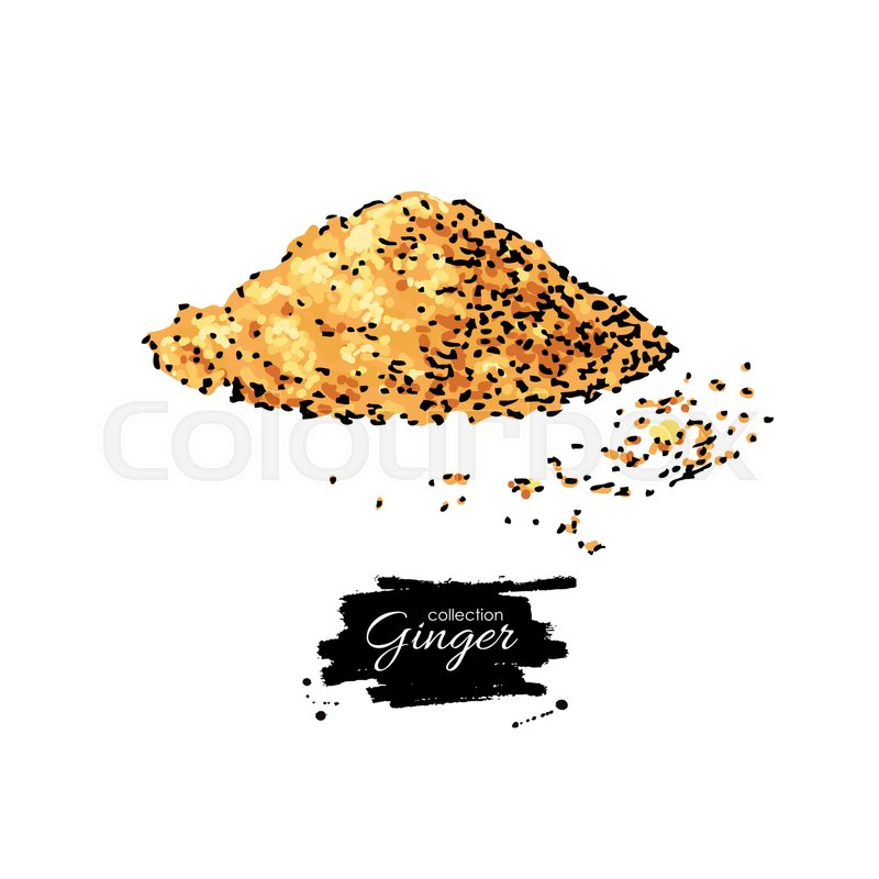 800x800 Ginger Root Powder Vector Hand Drawn Illustration. Artistic Style
