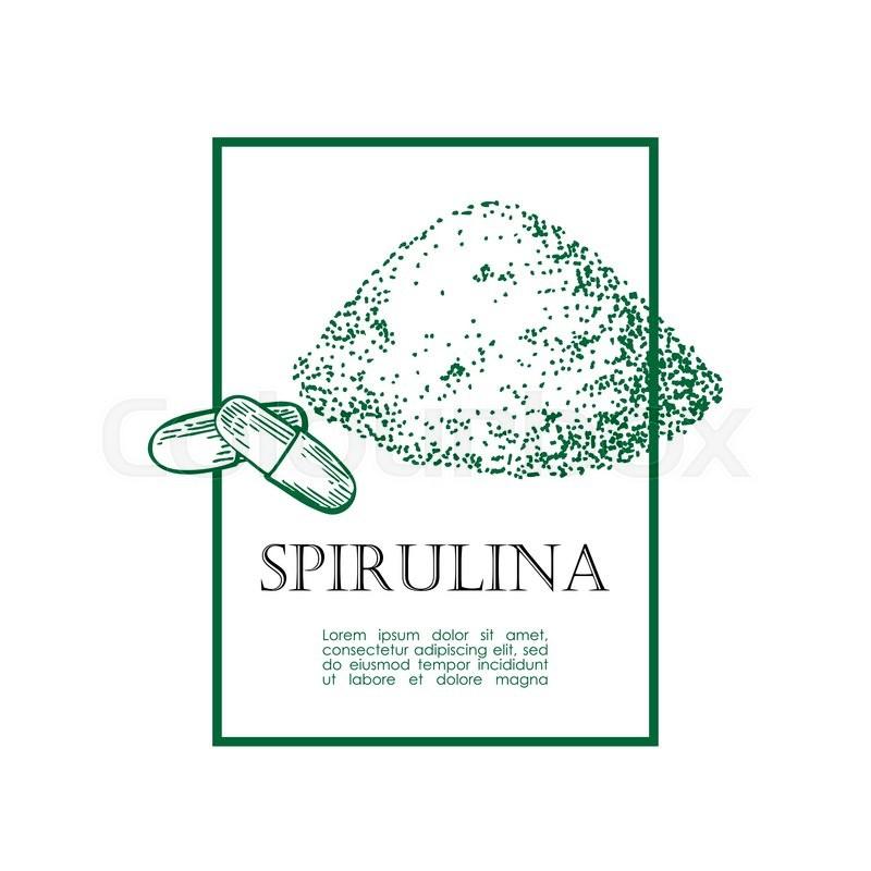 800x800 Spirulina Seaweed Powder Hand Drawn Vector Illustration. Isolated