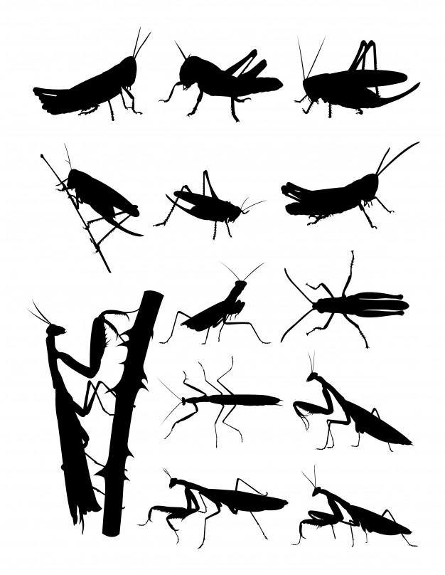 626x808 Grasshopper And Praying Mantis Silhouette Vector Premium Download
