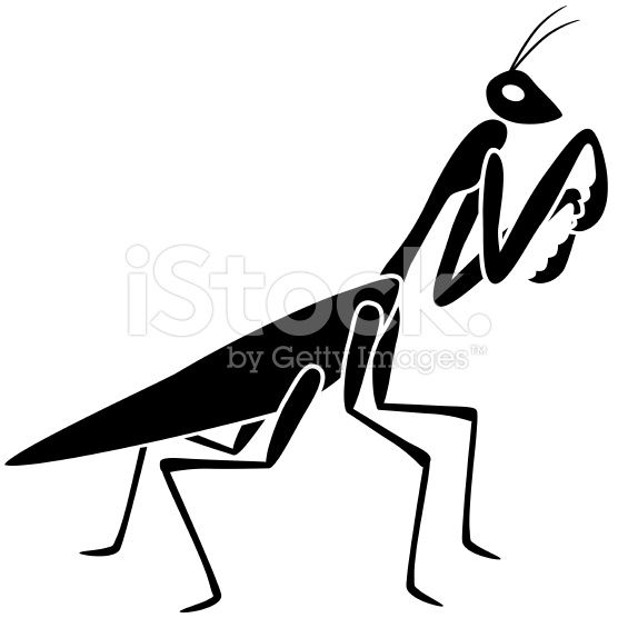 556x556 A Vector Illustration Of A Praying Mantis In Black And White
