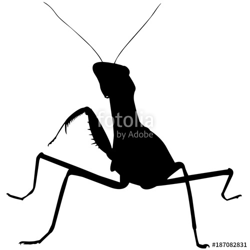 500x500 Praying Mantis Silhouette Vector Graphics Stock Image And Royalty