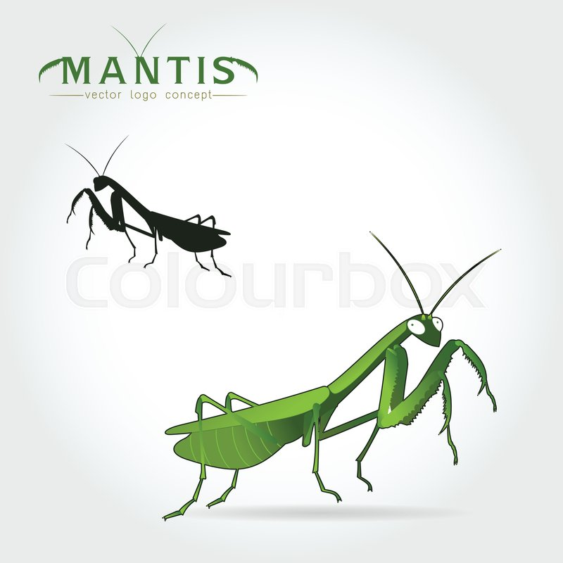 800x800 Beetle Praying Mantis Isolated On A White Background. Vector