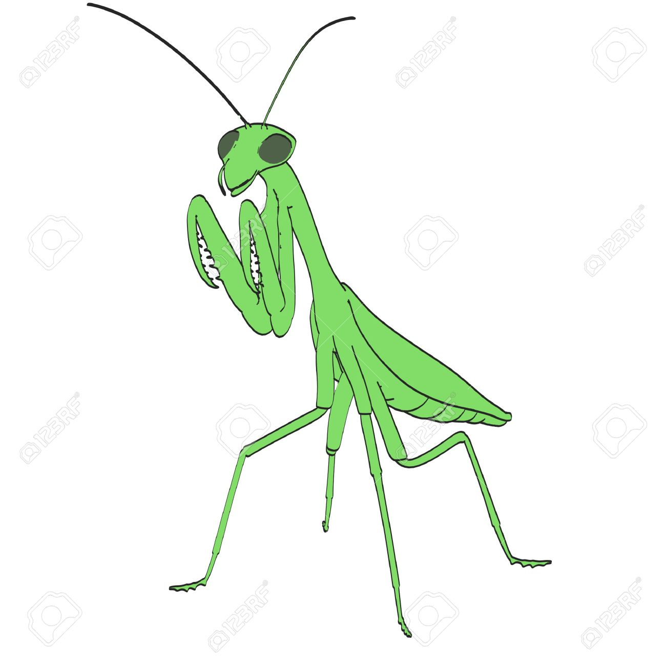 1300x1300 Bugs Clipart Praying Mantis ~ Frames ~ Illustrations ~ Hd Images
