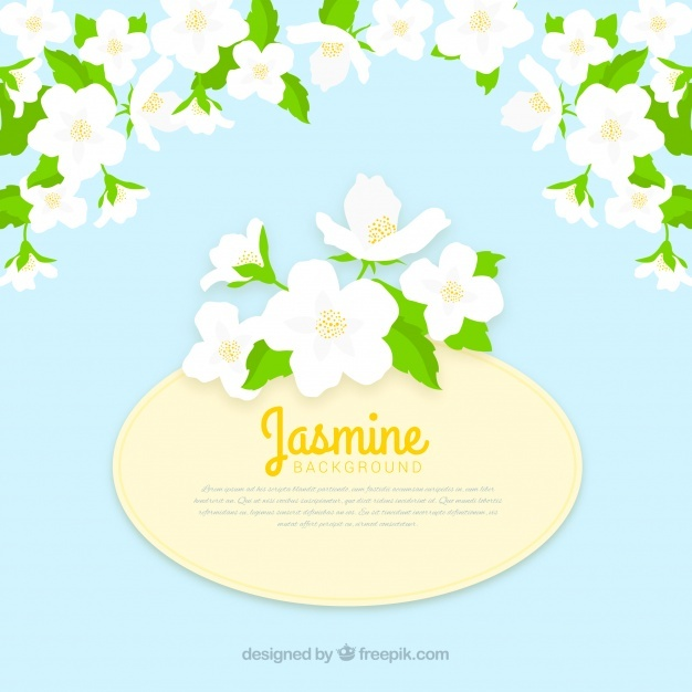 626x626 Jasmine Vectors, Photos And Psd Files Free Download