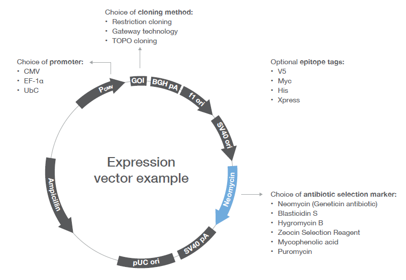808x558 Protein Expression Overview Protein Expression Handbook Thermo