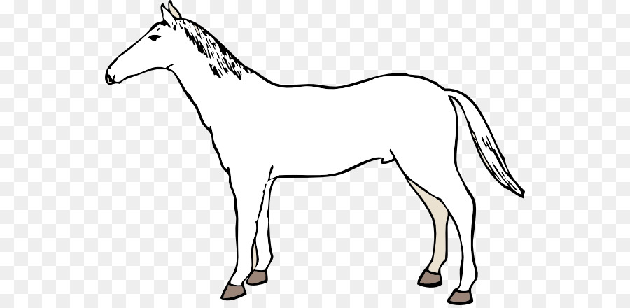 900x440 Mule Mustang American Paint Horse American Quarter Horse Mare