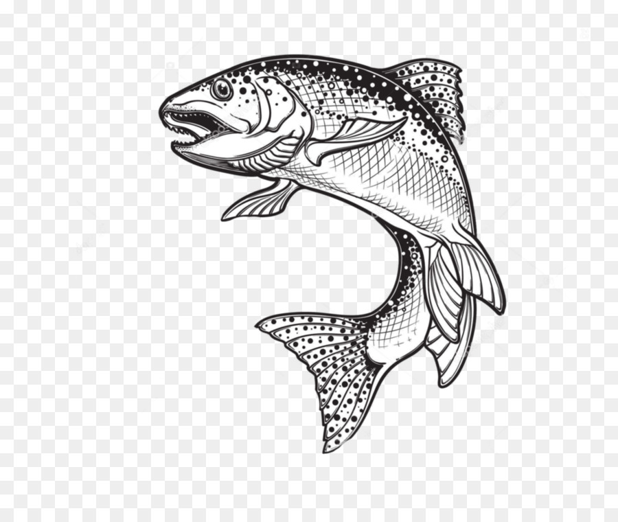 900x760 Rainbow Trout Drawing Sketch Vector Graphics Illustration