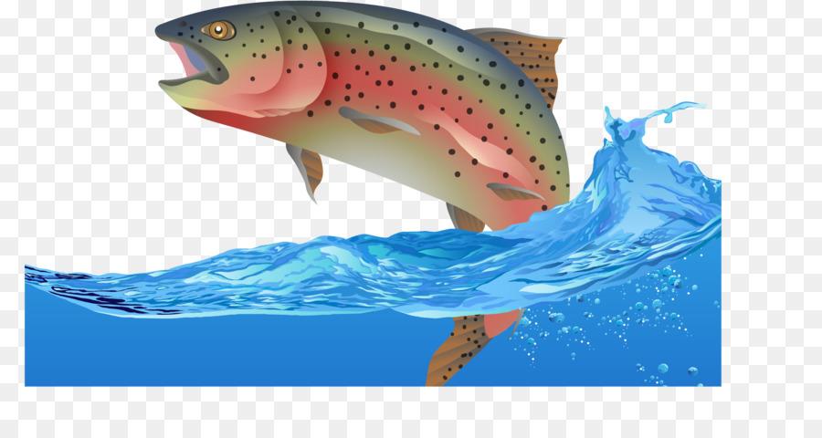 900x480 Rainbow Trout Fish Euclidean Vector