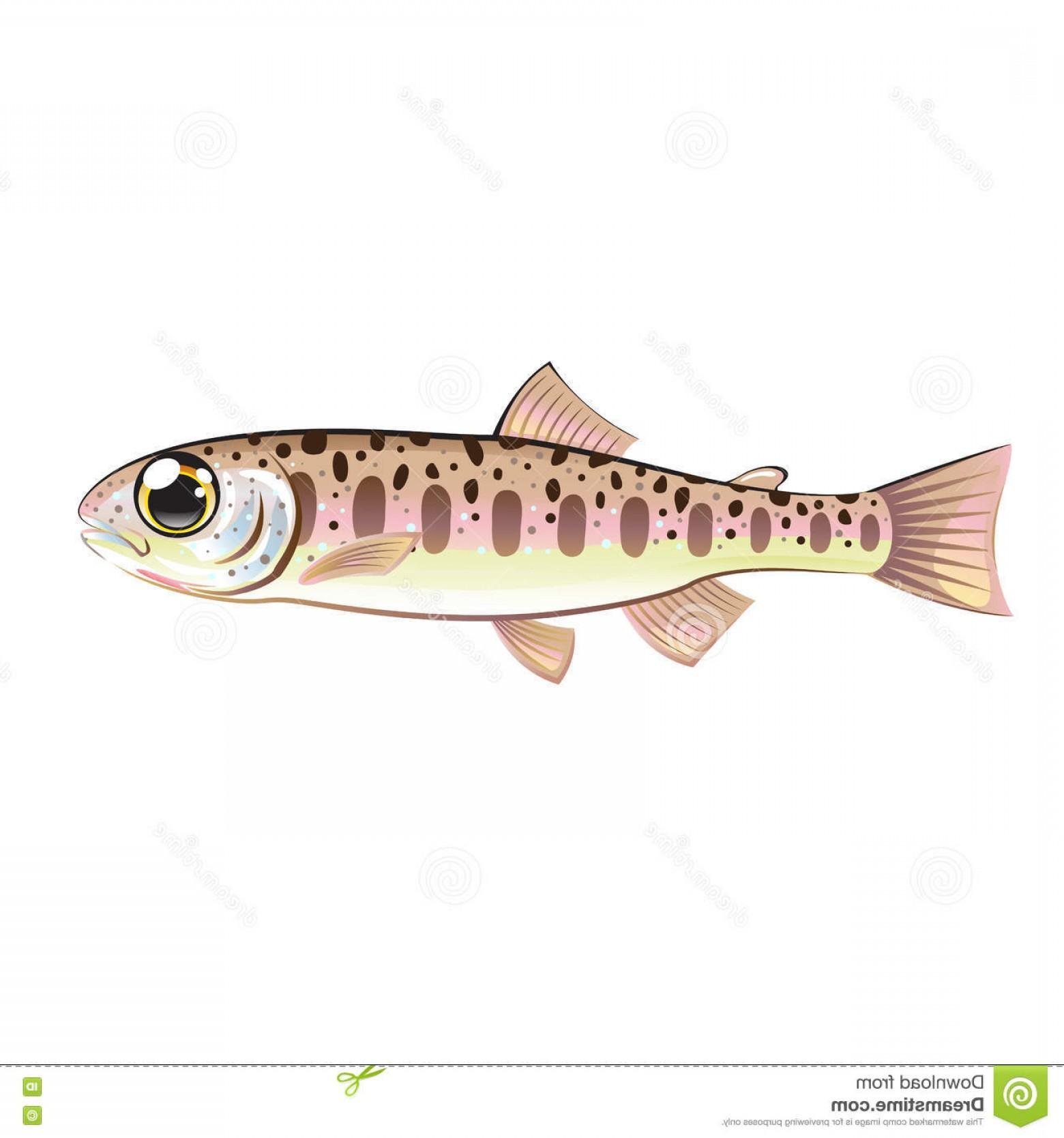 1560x1668 Stock Illustration Baby Trout Cartoonified Vector Art Fish Farm