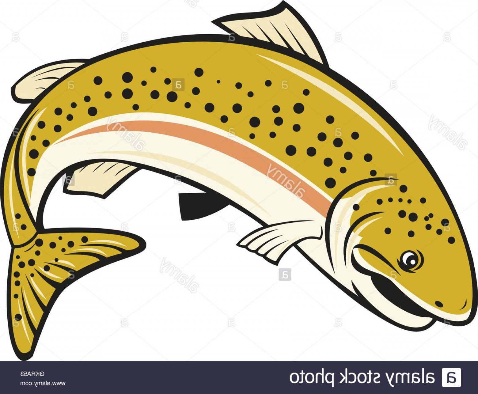 1560x1286 Stock Photo Rainbow Trout Jumping Cartoon Isolated Sohadacouri