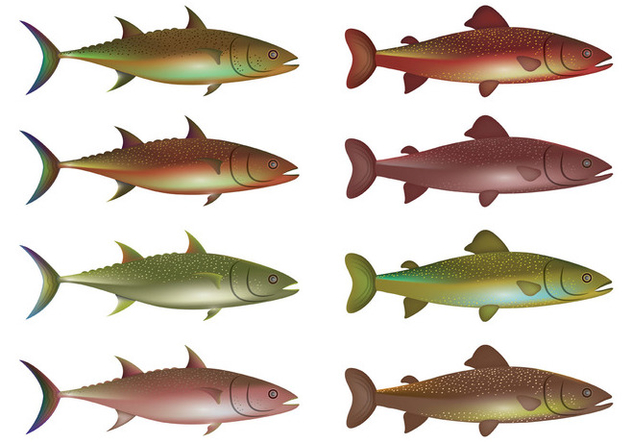 632x443 Vector Of Rainbow Trout Free Vector Download 399025 Cannypic