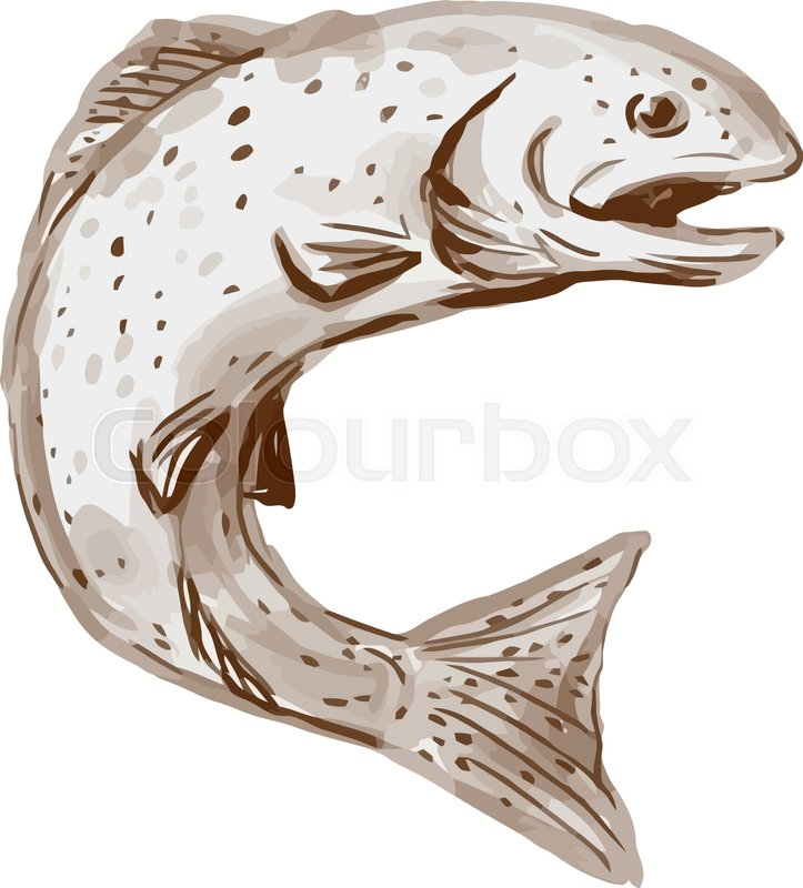 723x800 Watercolor Style Illustration Of A Rainbow Trout Fish Jumping