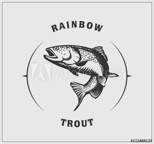 500x465 Illustration Of Rainbow Trout.