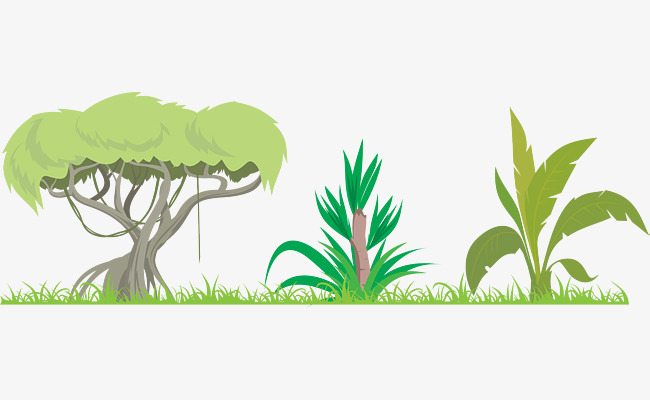 650x400 The Dense Plant Of The Amazon Rainforest, Plant Clipart, Forest