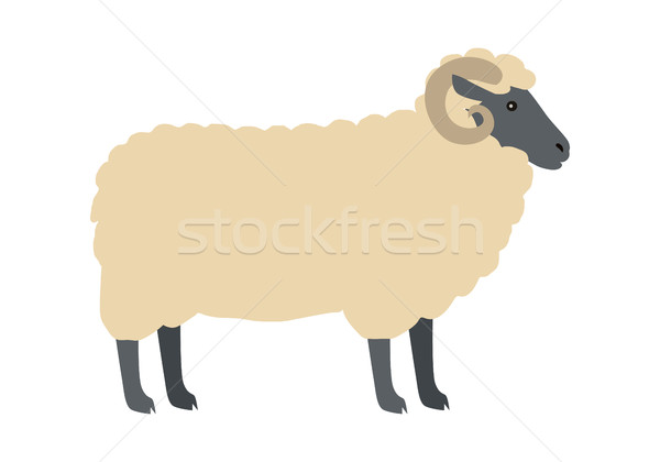 600x420 Ram With Wool Vector Flat Design Illustration Vector Illustration