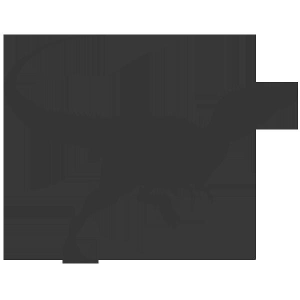 600x600 15 Raptor Vector Bone For Free Download On Mbtskoudsalg