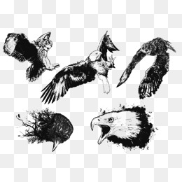 260x260 Raptor Vector Png, Vectors, Psd, And Clipart For Free Download
