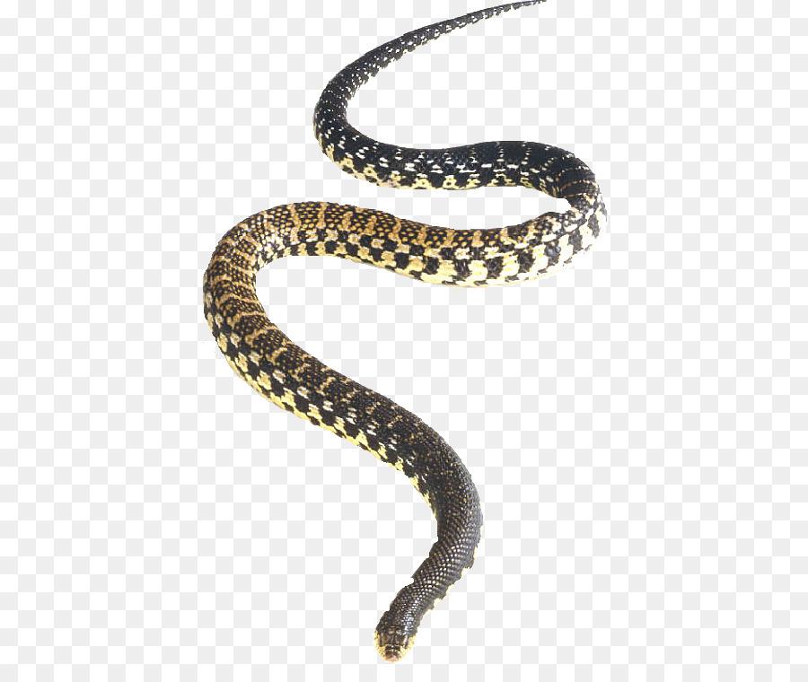 900x760 Northern Redbelly Snake Rattlesnake Eastern Hognose Snake