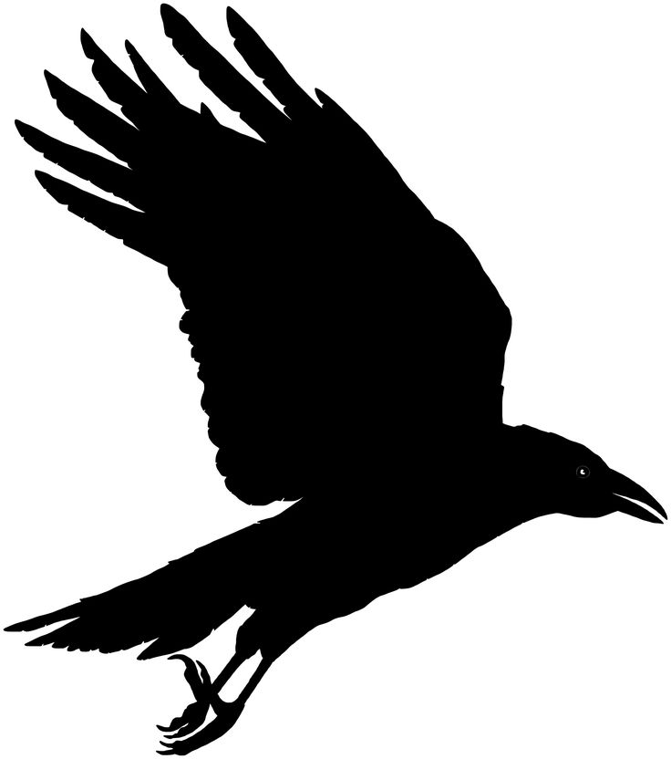 The Best Free Raven Vector Images Download From 89 Free Vectors Of