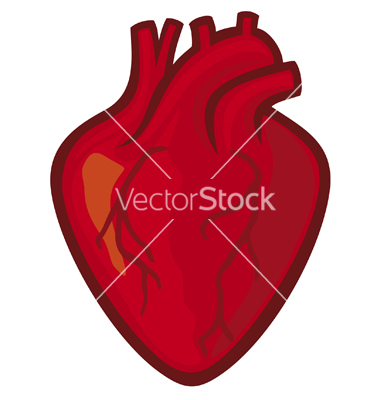 Real Heart Vector