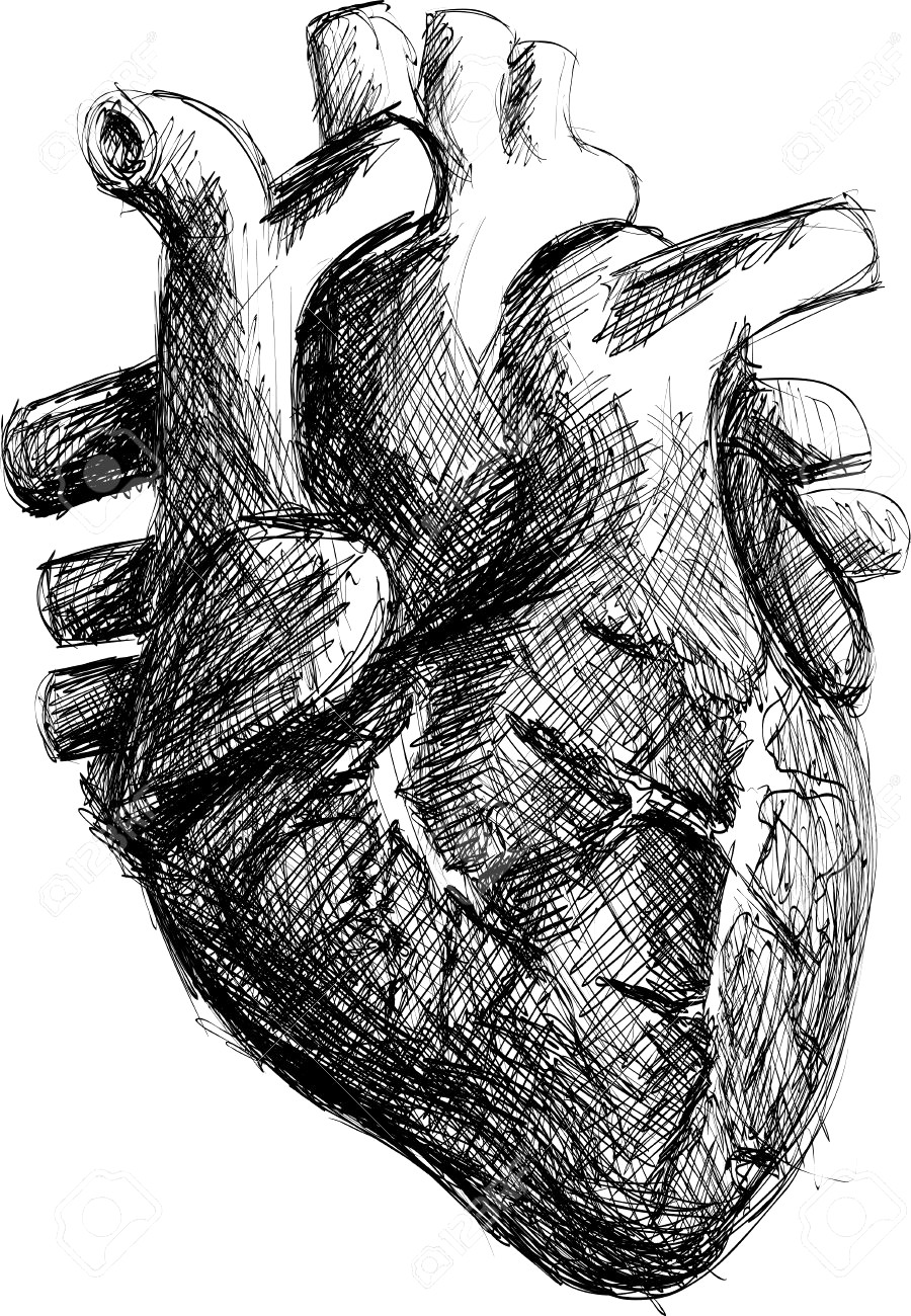 900x1300 Human Heart Drawing Line Work Royalty Free Vector Image Lovely