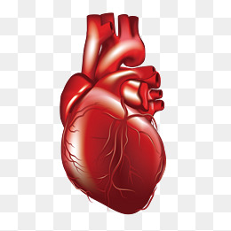 260x261 Human Heart Png Images Vectors And Psd Files Free Download On