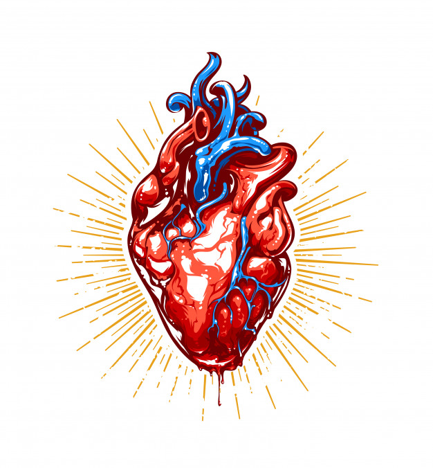 626x676 Realistic Heart Illustration Vector Free Download