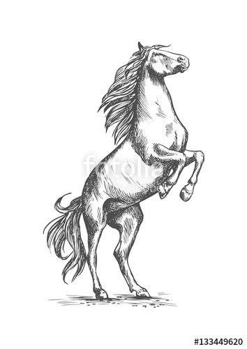354x500 Rearing Horse Vector Sketch Equine Horserace Sport Stock Image