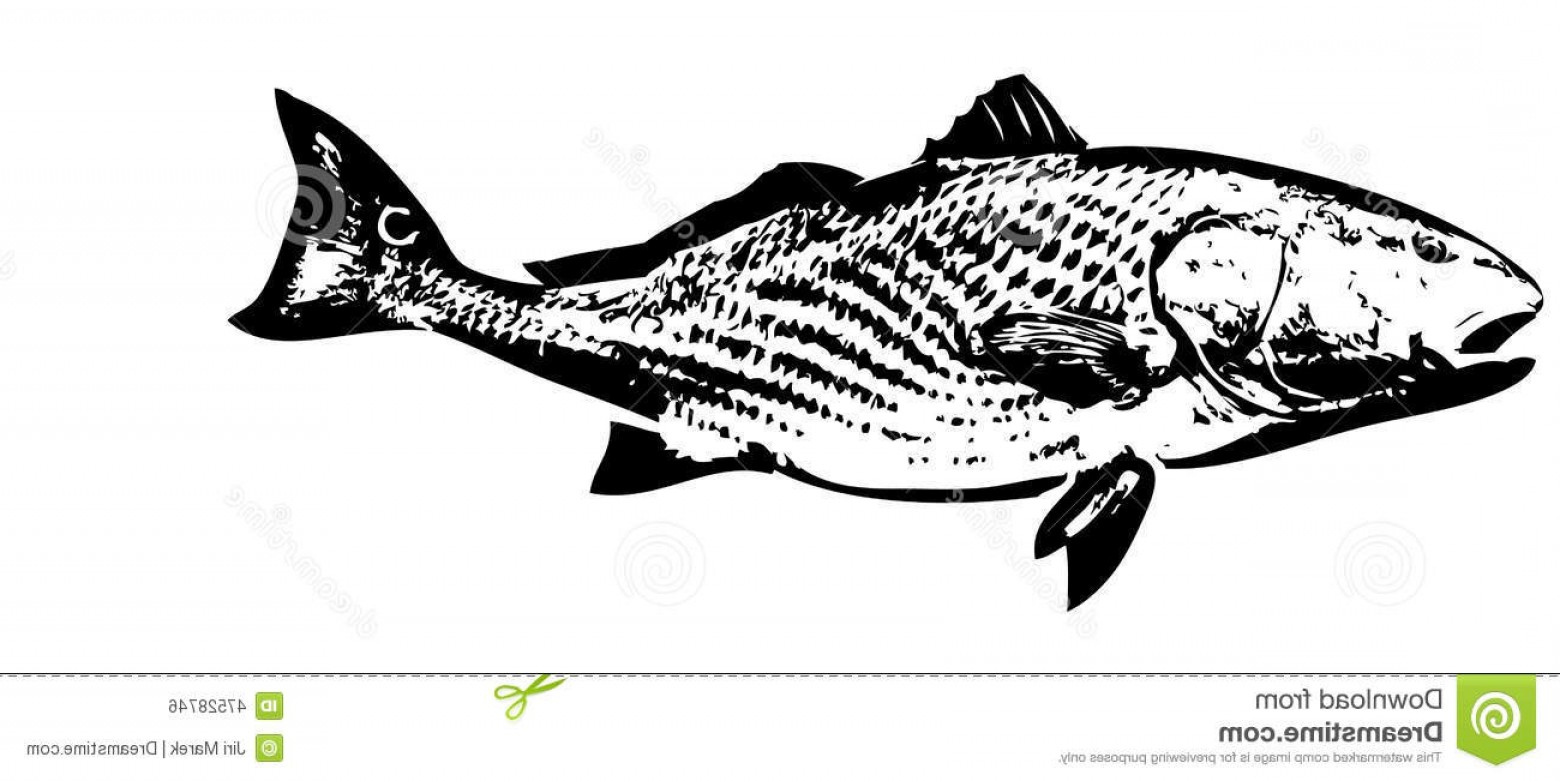 1560x781 Red Fish Vector Arenawp