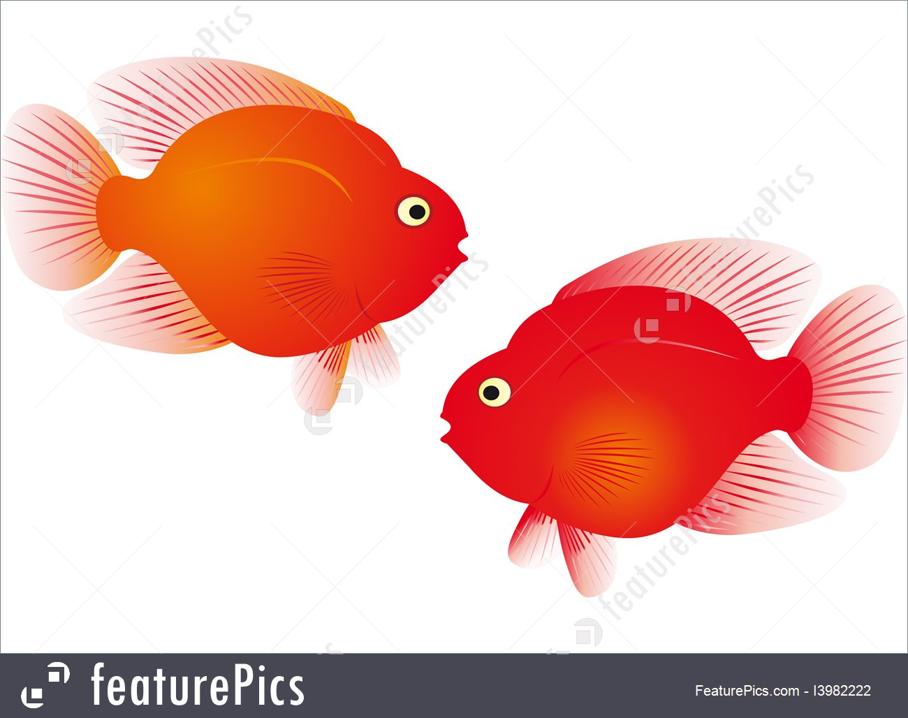 1300x1028 Red Parrot Fish Vector