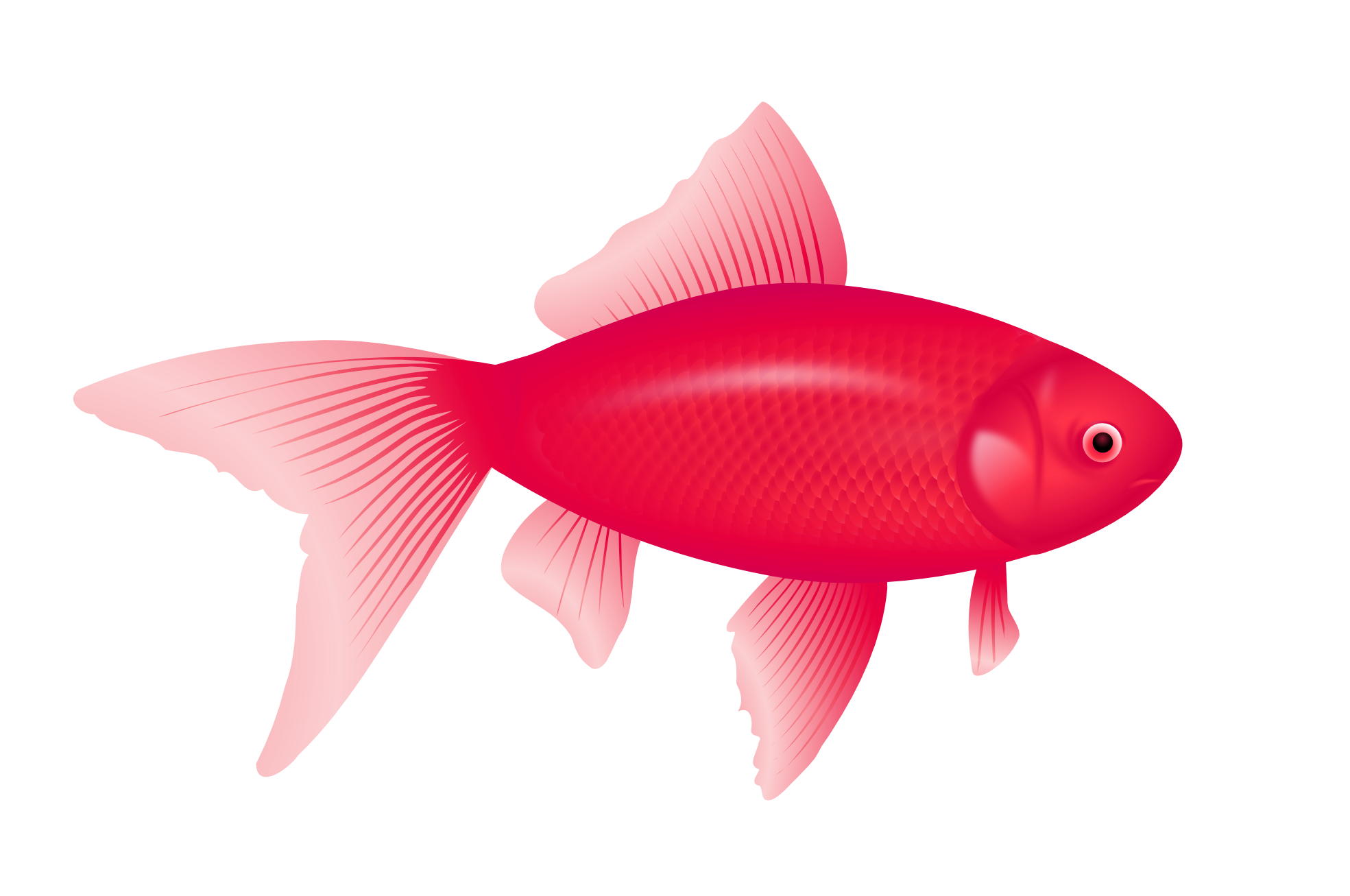 1969x1307 Red Fish Vector Transparent Stock