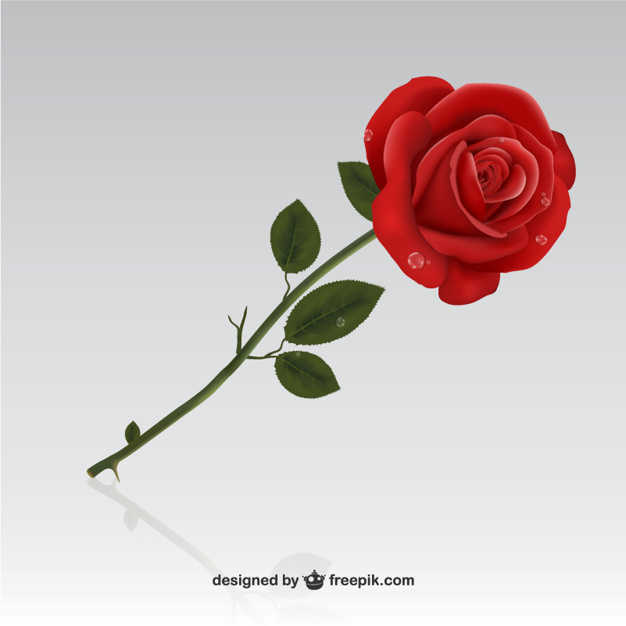 626x626 Red Rose Vector Free Download