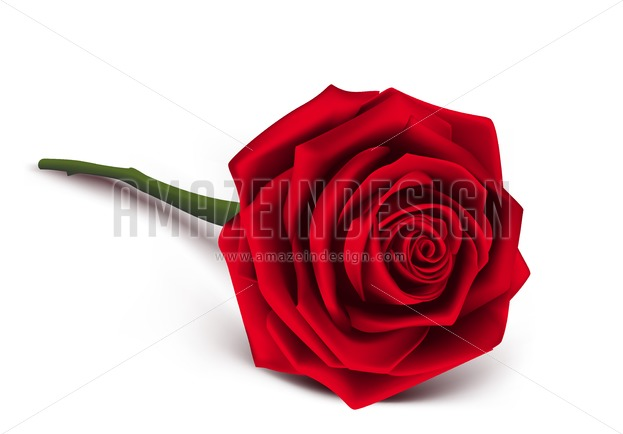 623x434 Red Rose Vector Illustration For Valentines