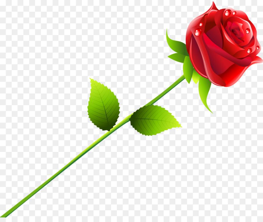 900x760 Beach Rose Red