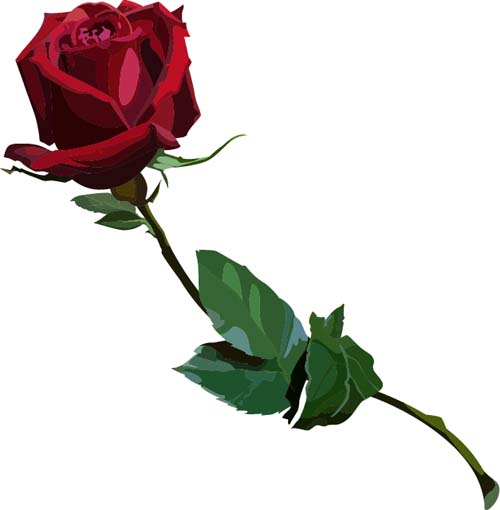 500x510 Red Rose Realitic Vector 04 Free Download