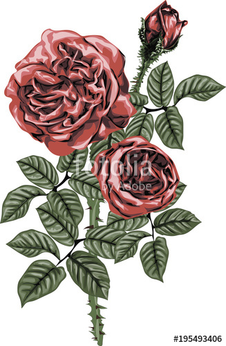 327x500 Red Roses Vector Art