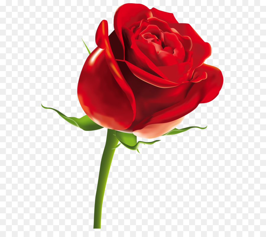 900x800 Rose Scalable Vector Graphics Computer File