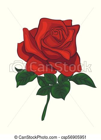 337x470 Single Red Rose. Red Rose Isolated On White Background. Vector