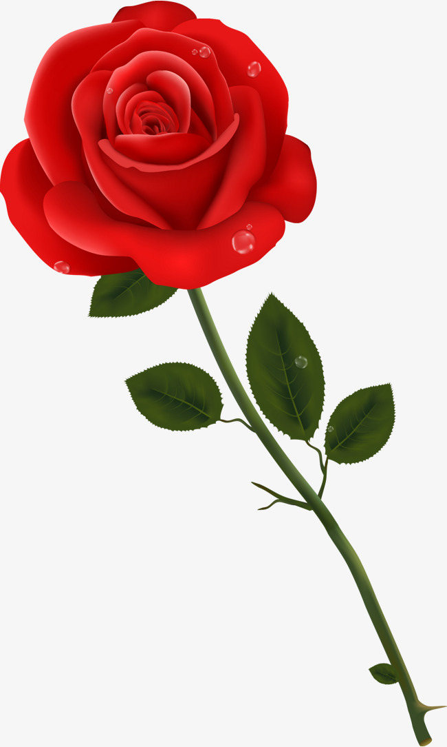 650x1084 Vector Hand Painted With Red Rose With Water Drops, Hand Vector