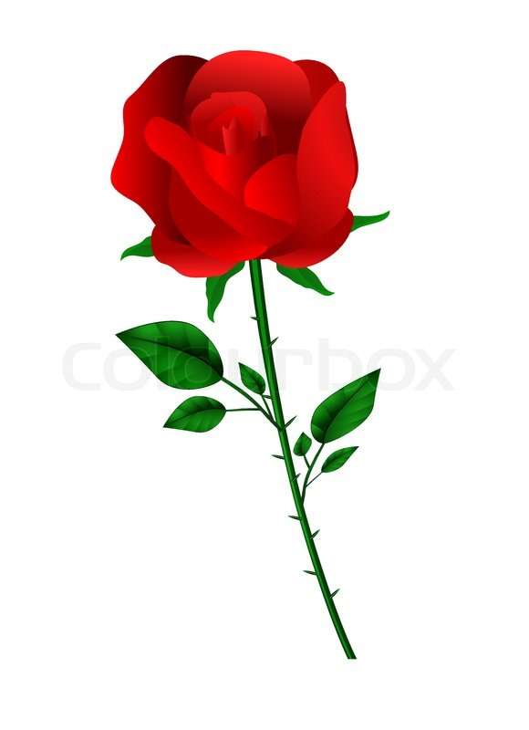 580x800 Vector Red Rose On White Stock Vector Colourbox