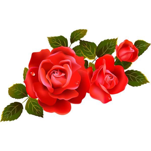600x600 Red Roses Vector Image ~ Iandeks.fotki Liked On Polyvore