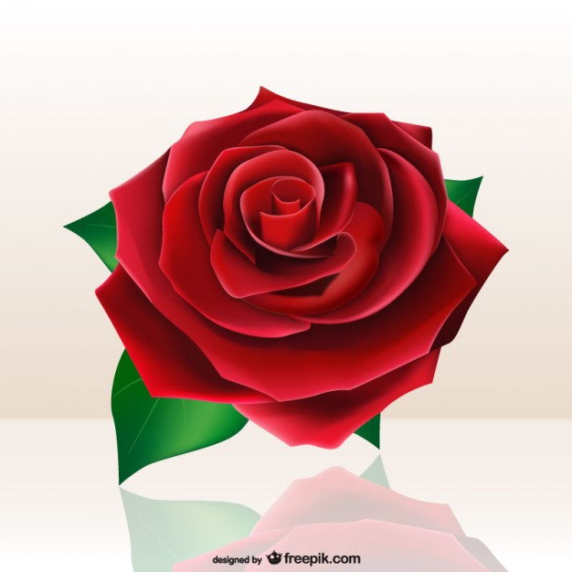 626x626 Beautiful Red Rose Vector Free Download