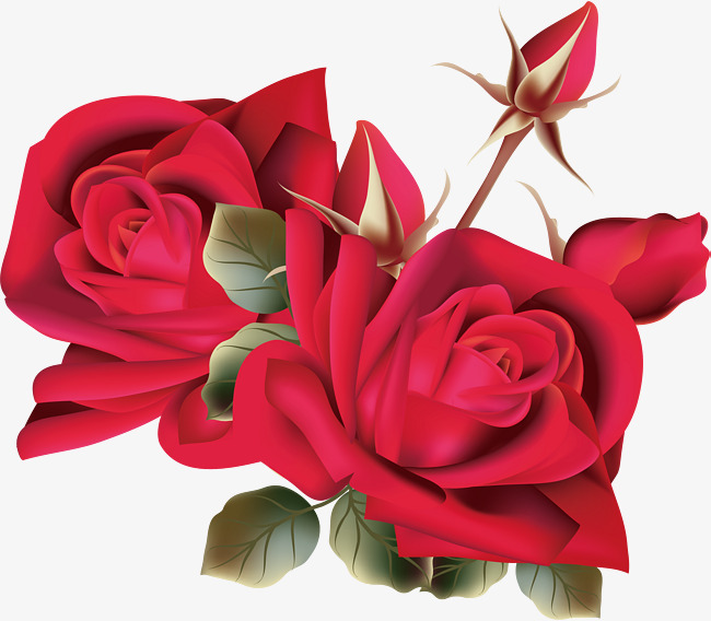 650x568 Fine Red Roses, Vector Png, Rose, Red Rose Png And Vector For Free