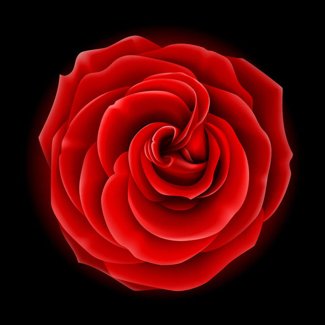 640x640 Free Vectors Realistic Full Blossom Red Rose Flower Vector