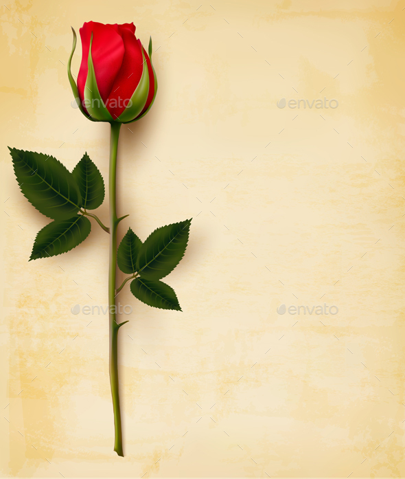 590x697 Happy Valentines Day Background Single Red Rose Vector By Almoond