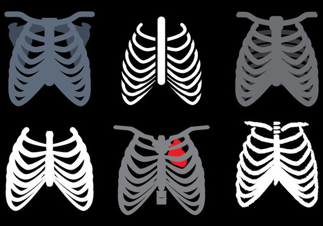 632x443 Ribcage Vector Free Vector Download 381271 Cannypic