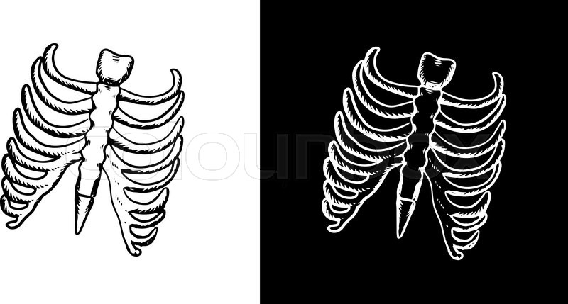 800x429 X Ray And Skeleton Of Human Rib Cage With Ribs And Part Of Spine