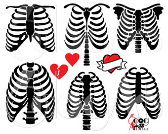 340x270 Xray Clipart Skeleton Rib Cage ~ Frames ~ Illustrations ~ Hd